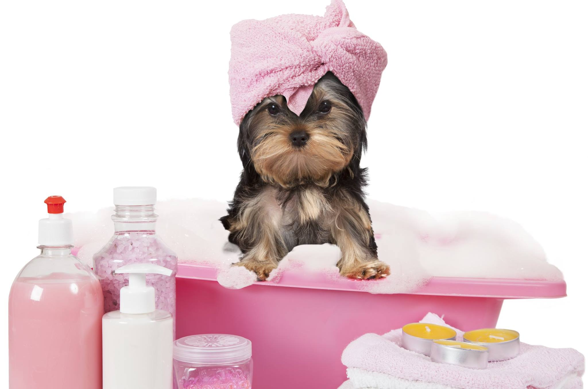 Puppy Luv Dog Grooming Salon Of Weatherford Texas